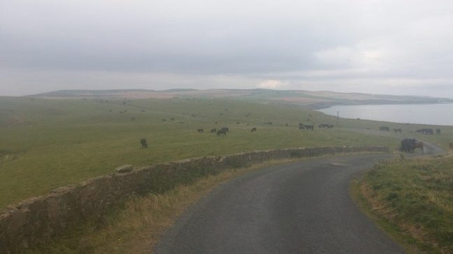 Looking back at some of my cow friends. When I came back down they were all over the road! All of them.